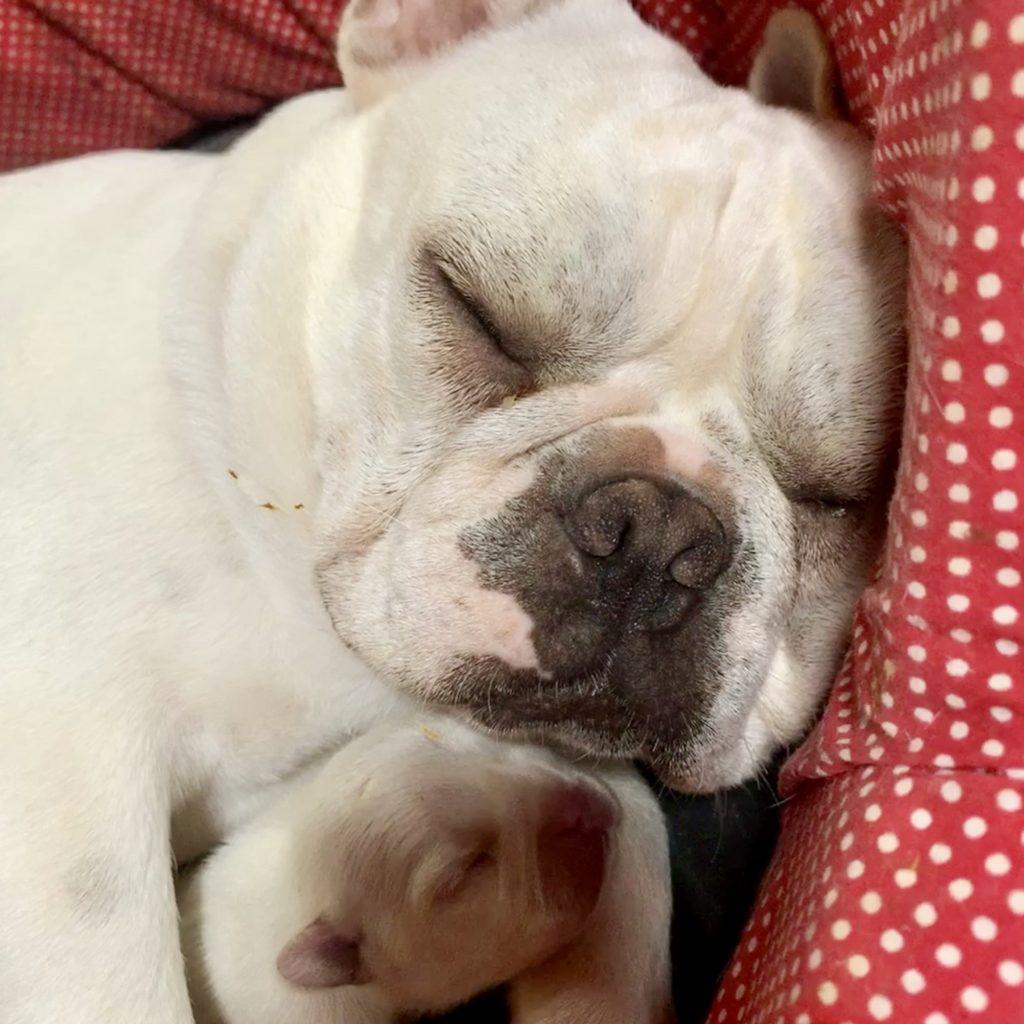 子犬の見学開始しました!|新着情報と出産のお知らせ