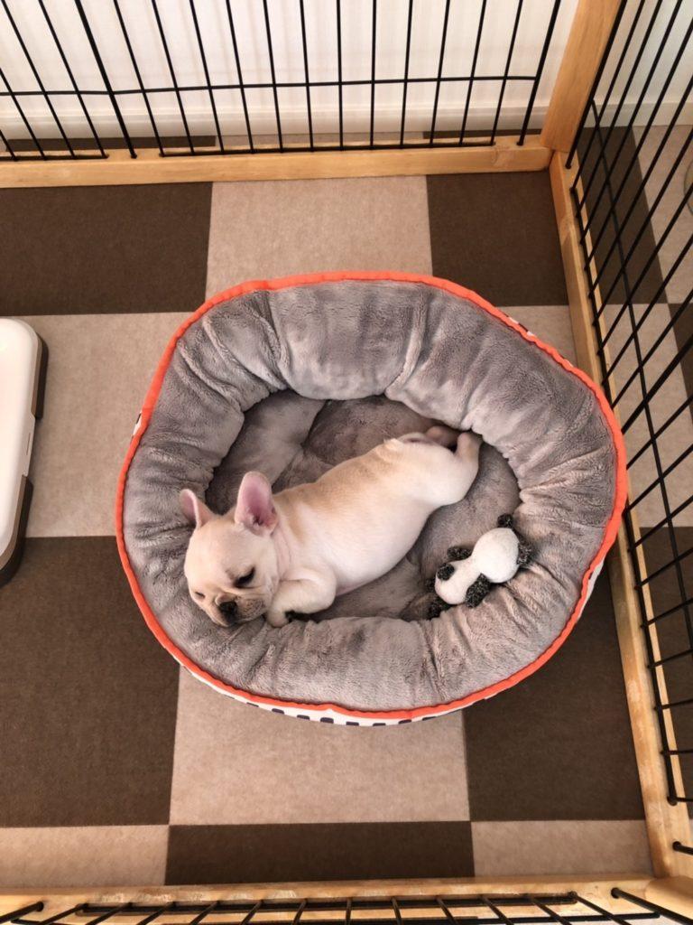 楽久ちゃん🐾ぬくぬく〜🔆|シオから巣立った子犬写真館