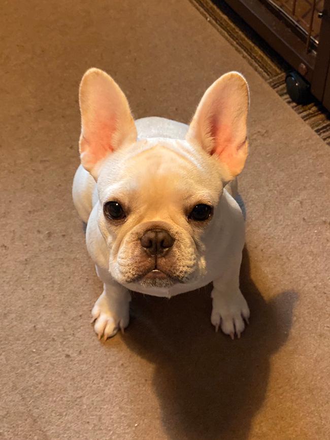 ブルちゃんです🐾 シオから巣立った子犬写真館