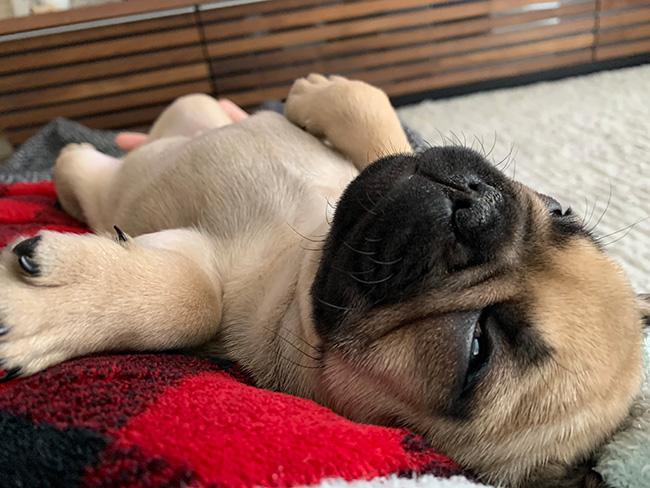 うなじゅうちゃんのおとーさんとおかーさんから嬉しいお便りが届きました😊|シオから巣立った子犬写真館