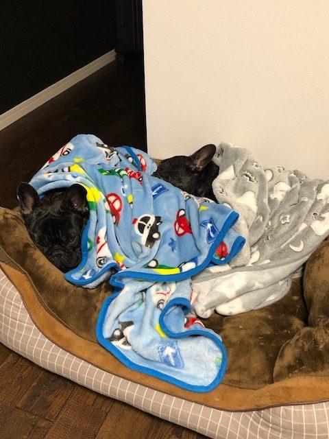 鈴木剣心くんのおとーさんおかーさんから嬉しいお便りが届きました😊 シオから巣立った子犬写真館