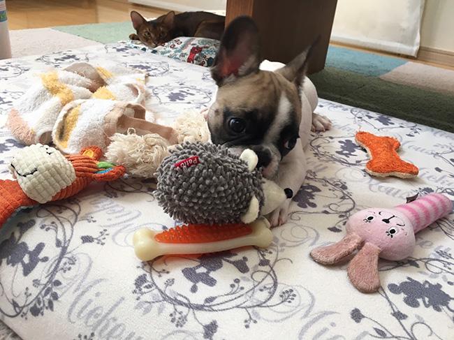 ひなたちゃんのおかーさんから嬉しいお便りが届きました😊 シオから巣立った子犬写真館