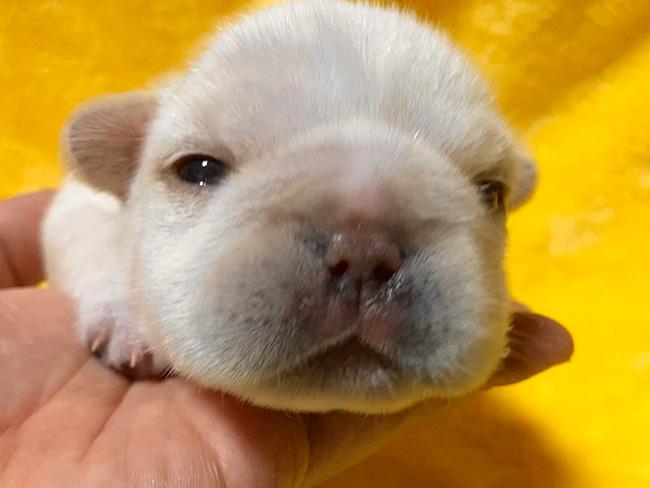 子犬の見学開始しました😊|新着情報と出産のお知らせ