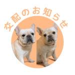 フレンチブルドッグ|ドッグハウス シオ|交配のお知らせ【しし丸&小梅】
