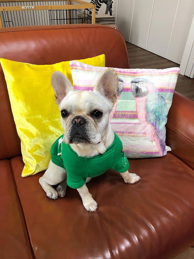楽久ちゃんのおかーさんとおとーさんから嬉しいお便りが届きました😆 シオから巣立った子犬写真館
