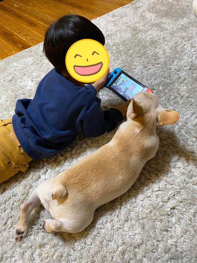 koaちゃんのおかーさんから嬉しいお便りが届きました😊 シオから巣立った子犬写真館