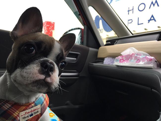 ひなたちゃんのおかーさんから嬉しいお便りが届きました😆|シオから巣立った子犬写真館