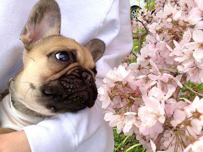 うなじゅうちゃんのおかーさんから嬉しいお便りが届きました😊|シオから巣立った子犬写真館