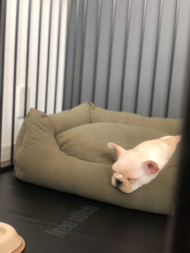 ちくわくんのおかーさんから嬉しいお便りが届きました😆 シオから巣立った子犬写真館