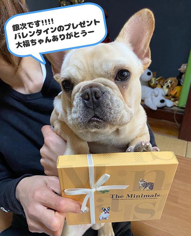 大福ちゃんのおとーさんとおかーさんから嬉しいお便りが届きました😊《2月》 シオから巣立った子犬写真館