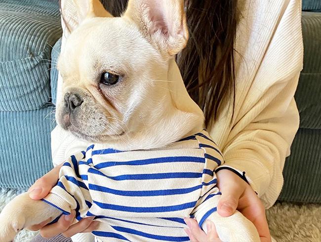 koaちゃんのおかーさんから嬉しいお便りが届きました😆|シオから巣立った子犬写真館