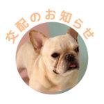 フレンチブルドッグ|ドッグハウス シオ|交配のお知らせ【よもぎ】