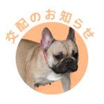 フレンチブルドッグ|ドッグハウス シオ|交配のお知らせ【土筆】