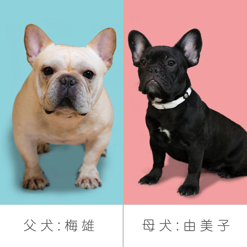 交配情報 由美子&梅雄 新着情報と出産のお知らせ