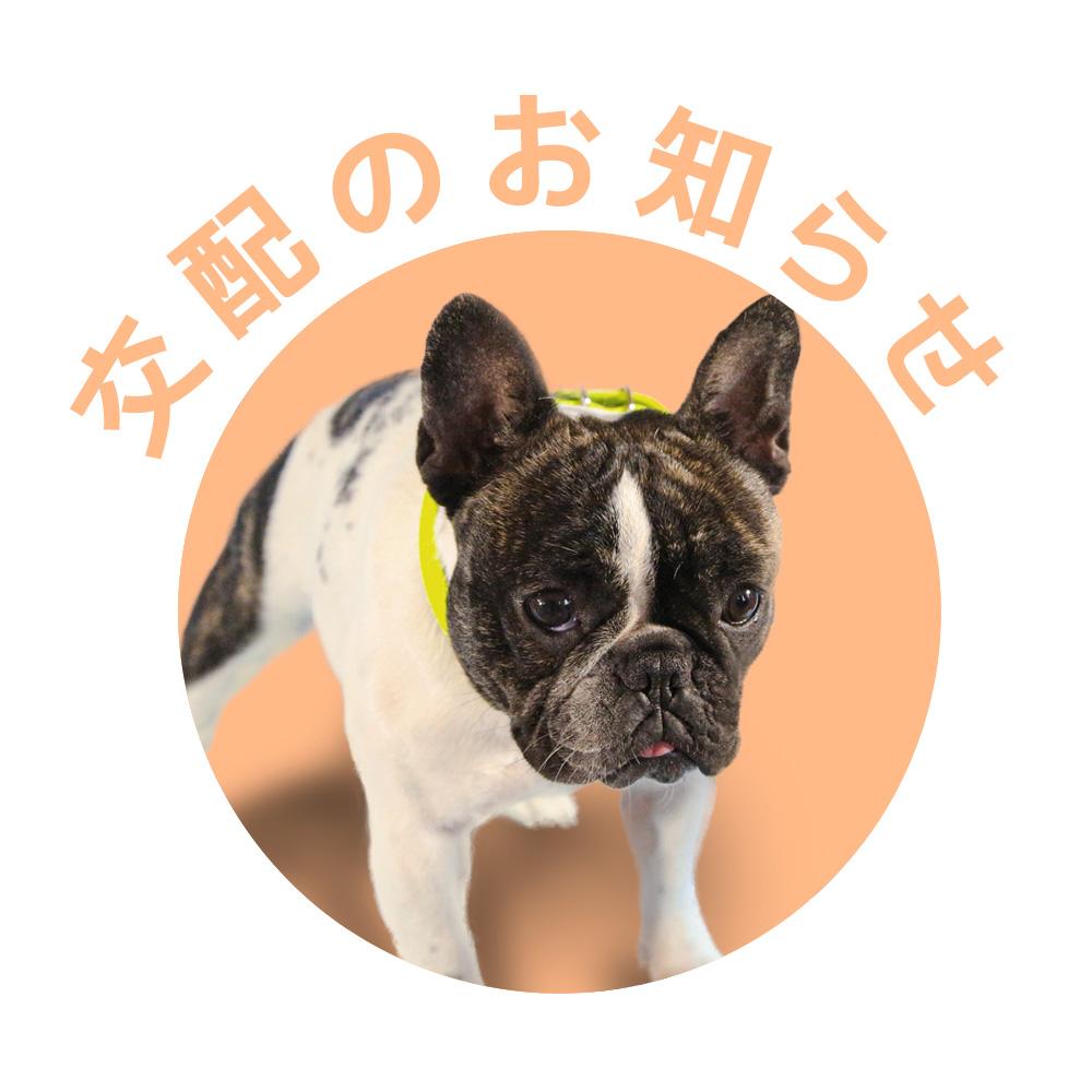 フレンチブルドッグ|ドッグハウス シオ|交配のお知らせ【とどこ】