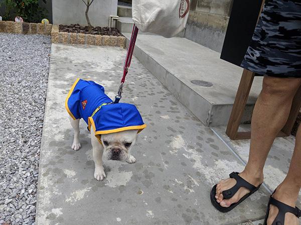 大福ちゃんのおとーさんとおかーさんから嬉しいお便りが届きました😊 シオから巣立った子犬写真館