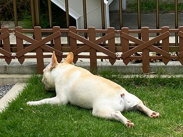 HAPPY BIRTHDAY🎂トラくん🎉 シオから巣立った子犬写真館