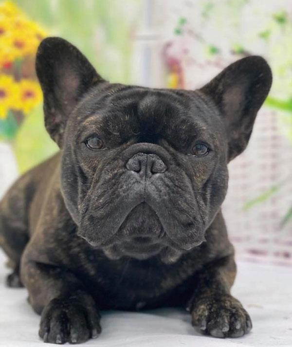HAPPY BIRTHDAY🎂剣心くん🎉 シオから巣立った子犬写真館