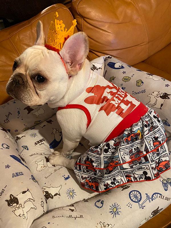 HAPPY BIRTHDAY🎂ブルちゃん🎉|シオから巣立った子犬写真館