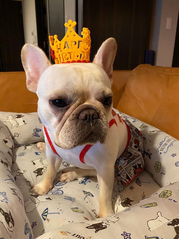 HAPPY BIRTHDAY🎂ブルちゃん🎉 シオから巣立った子犬写真館