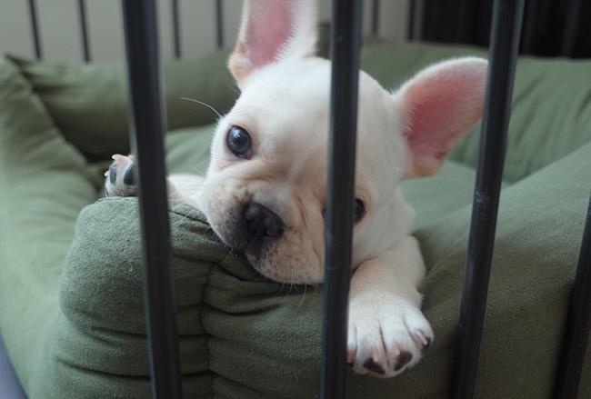 ちくわくんのご家族から嬉しいお便りをいただきました😆 シオから巣立った子犬写真館
