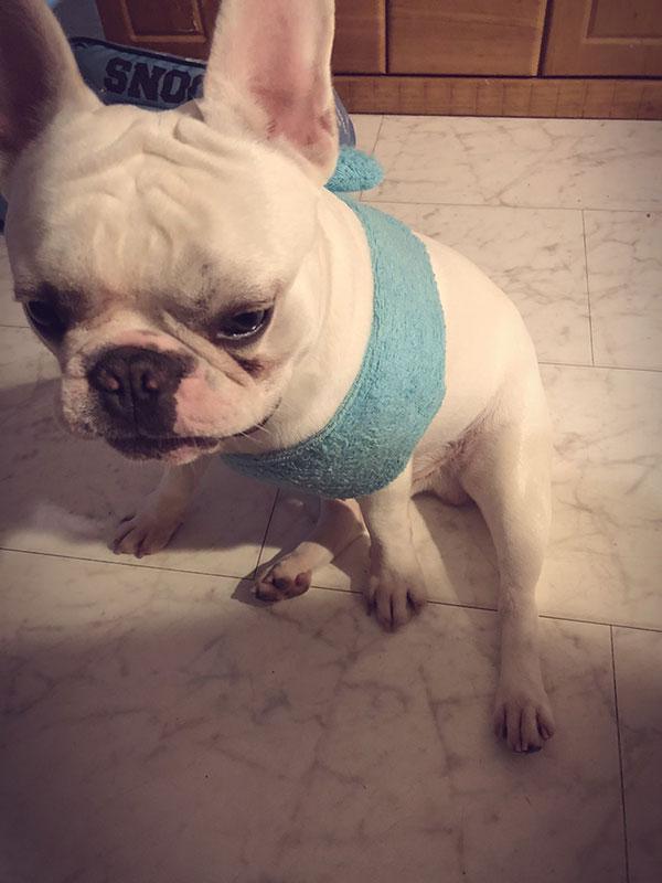 HAPPY BIRTHDAY🎂ロキくん🎉 シオから巣立った子犬写真館