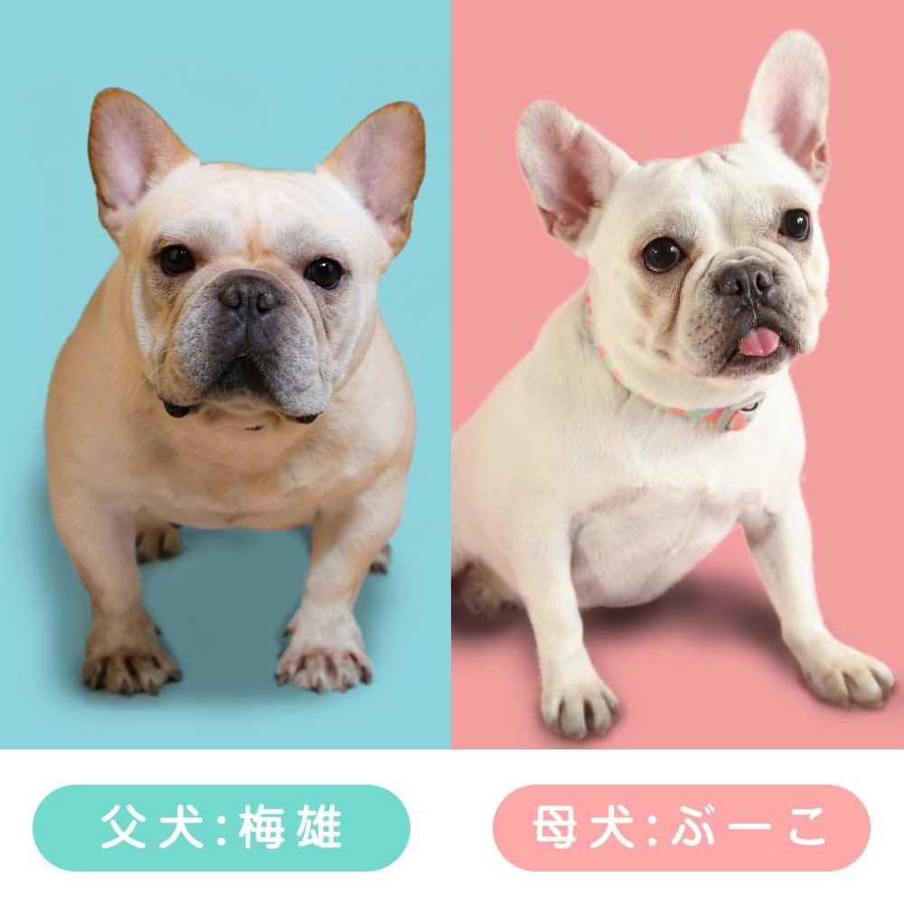交配情報 ぶーこ&梅雄|新着情報と出産のお知らせ