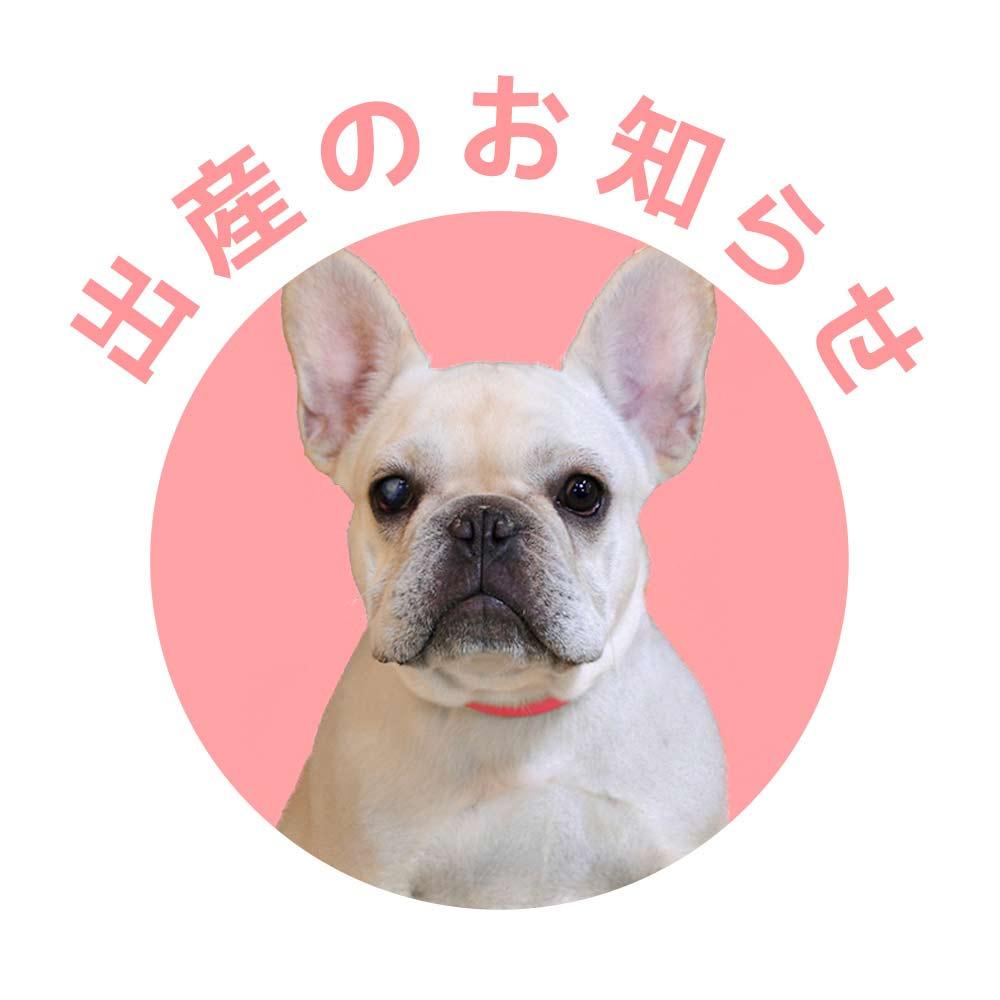 7/27 真由美ママと梅雄パパに元気なクリームの赤ちゃんが生まれました