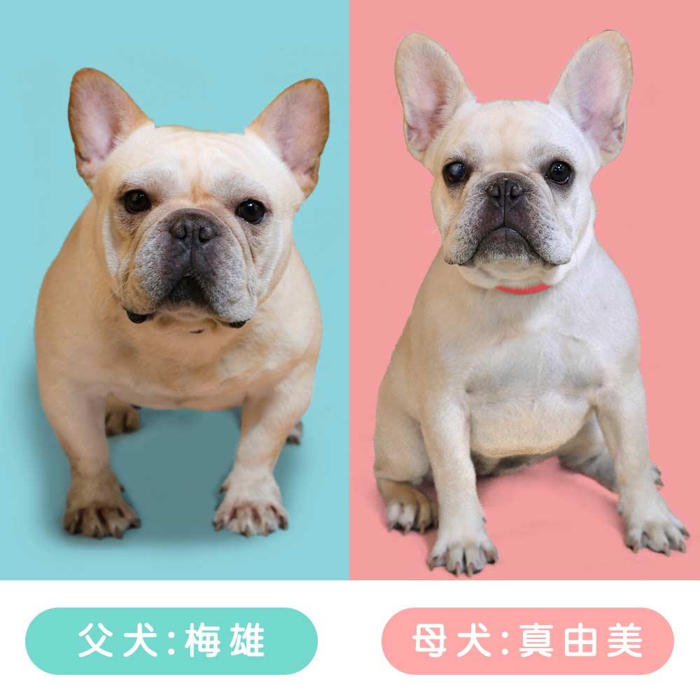 7/27 真由美ママと梅雄パパに元気なクリームの赤ちゃんが生まれました☺️|新着情報と出産のお知らせ
