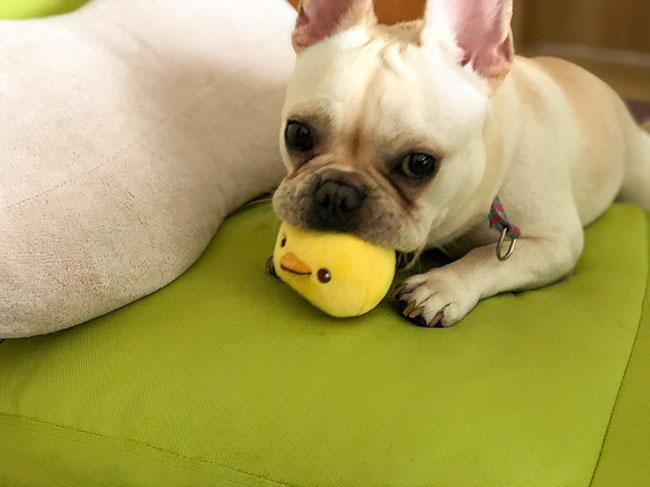 HAPPY BIRTHDAY🎂うにくん🎉 シオから巣立った子犬写真館