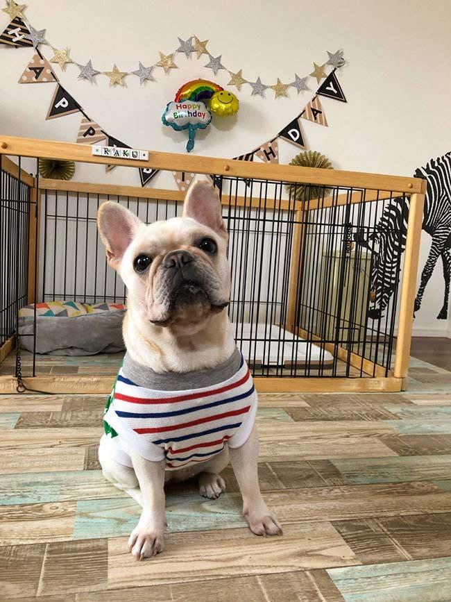 HAPPY BIRTHDAY🎂楽久ちゃん🎉|シオから巣立った子犬写真館