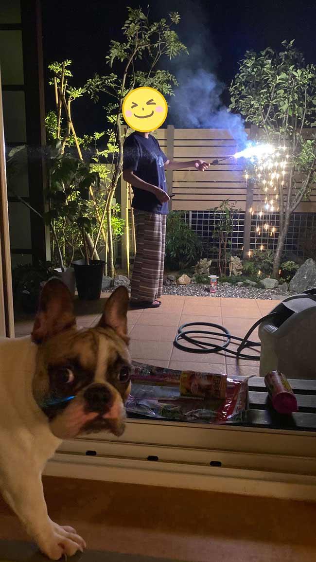ひなたちゃんのおかーさんからお便り届きました😊 シオから巣立った子犬写真館