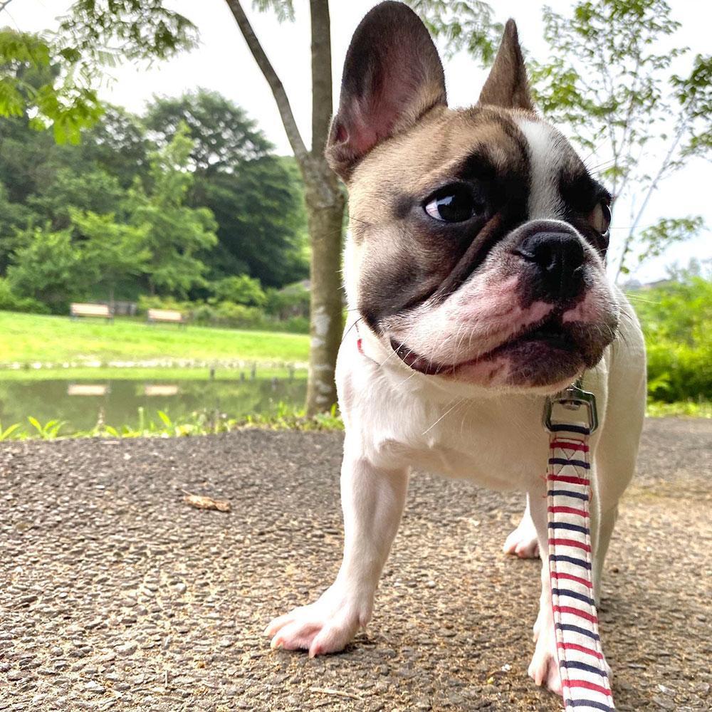ひなたちゃんのおかーさんからお便り届きました😊|シオから巣立った子犬写真館