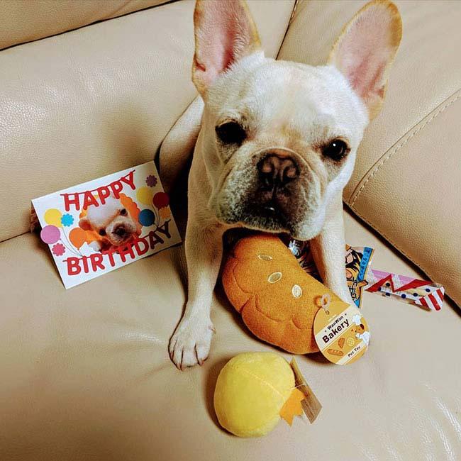 HAPPY BIRTHDAY🎂大福ちゃん🎉|シオから巣立った子犬写真館