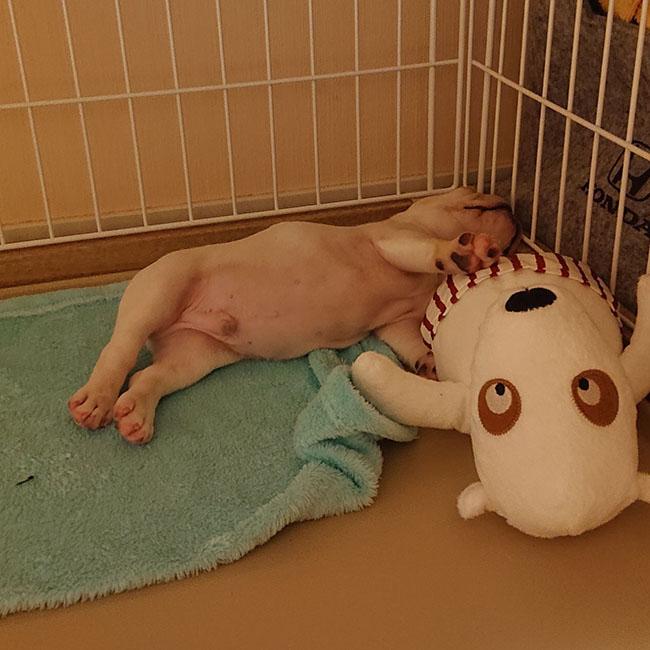 きたほくんのご家族さんからお便り届きました😊|シオから巣立った子犬写真館