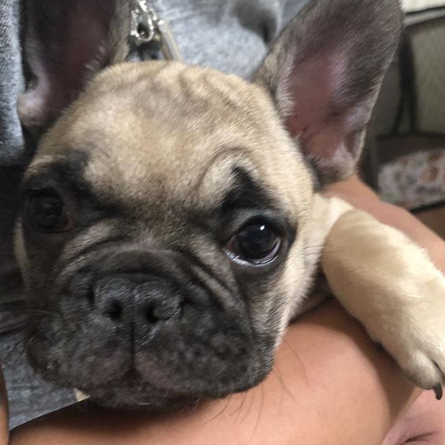 大翔(タイガ)くんのご家族さんからお便り届きました😊 シオから巣立った子犬写真館