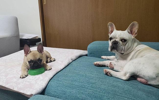 ジンベイくんのご家族さんからお便り届きました😊|シオから巣立った子犬写真館