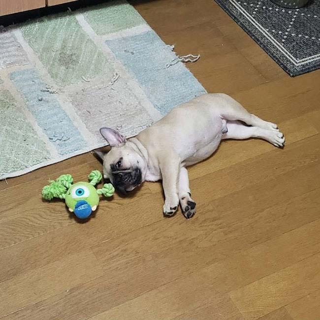 ジンベイくんのご家族さんからお便り届きました😊 シオから巣立った子犬写真館