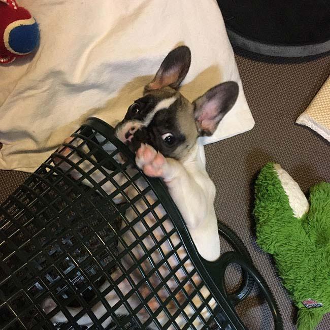 ポリコンちゃんのご家族さんからお便り届きました😊 シオから巣立った子犬写真館