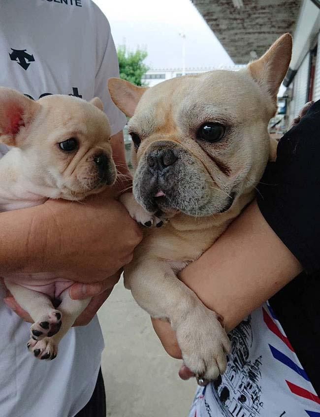 心夏(コナツ)ちゃんのご家族さんからお便り届きました😊 シオから巣立った子犬写真館