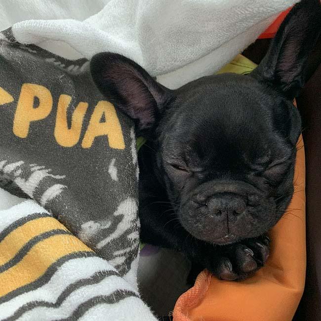 PUAちゃんのご家族さんからお便り届きました😊|シオから巣立った子犬写真館