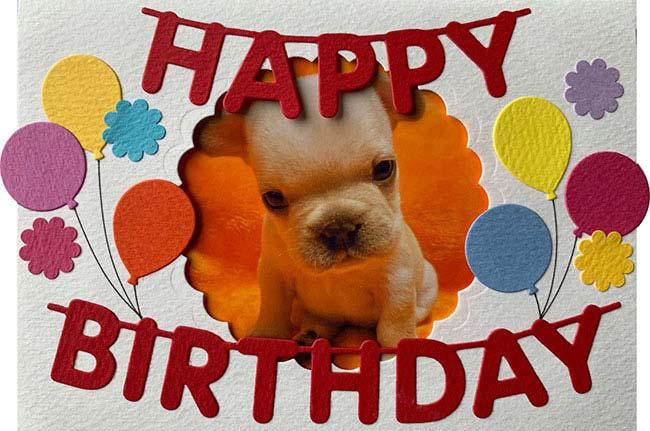 HAPPY BIRTHDAY🎂koaちゃん🎉|シオから巣立った子犬写真館