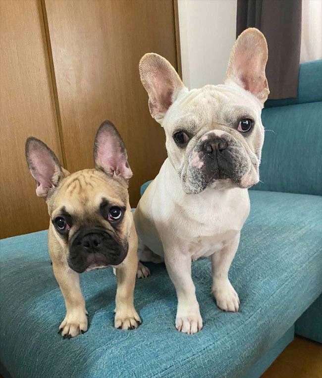 ジンベィくんのご家族さんからお便り届きました😊|シオから巣立った子犬写真館