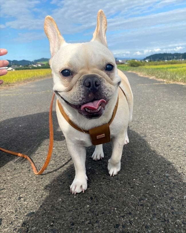 koaちゃんのご家族さんからお便り届きました😊|シオから巣立った子犬写真館