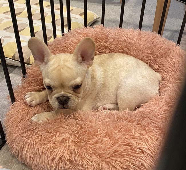 マチコちゃんのご家族さんからお便り届きました😊 シオから巣立った子犬写真館