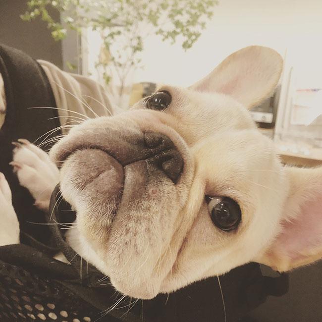 ちくわくんのご家族さんからお便り届きました😊 シオから巣立った子犬写真館