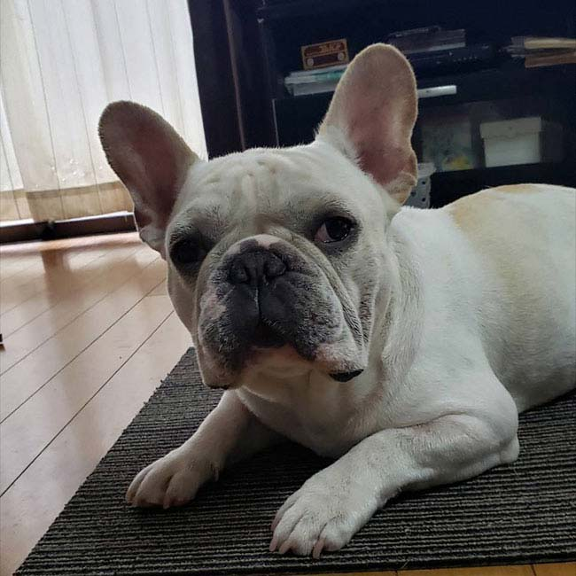 ジンベィくんのご家族さんからお便り届きました😊 シオから巣立った子犬写真館