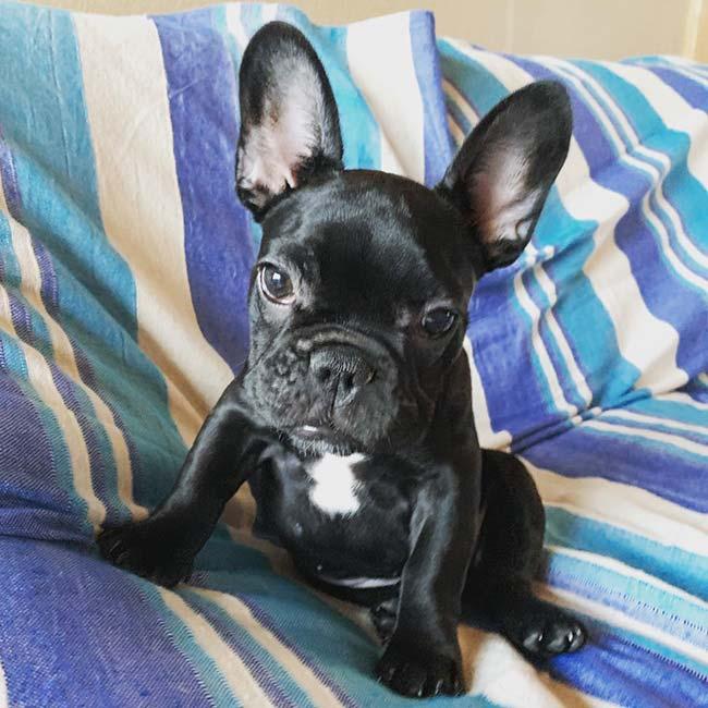 プアちゃんのご家族さんからお便り届きました😊|シオから巣立った子犬写真館