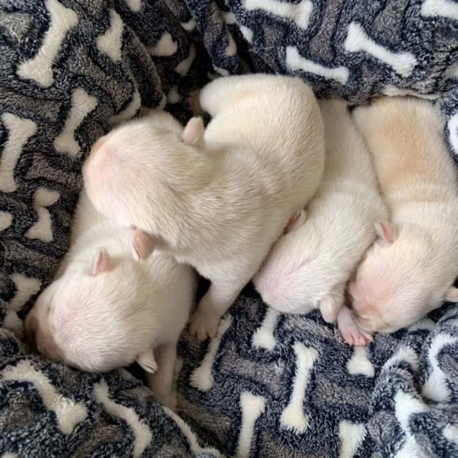9/25 ぶー子と梅雄の赤ちゃんが産まれました💕|新着情報と出産のお知らせ