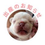 9/25 ぶー子と梅雄の赤ちゃんが産まれました